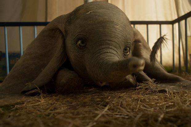 04 Dumbo.jpg